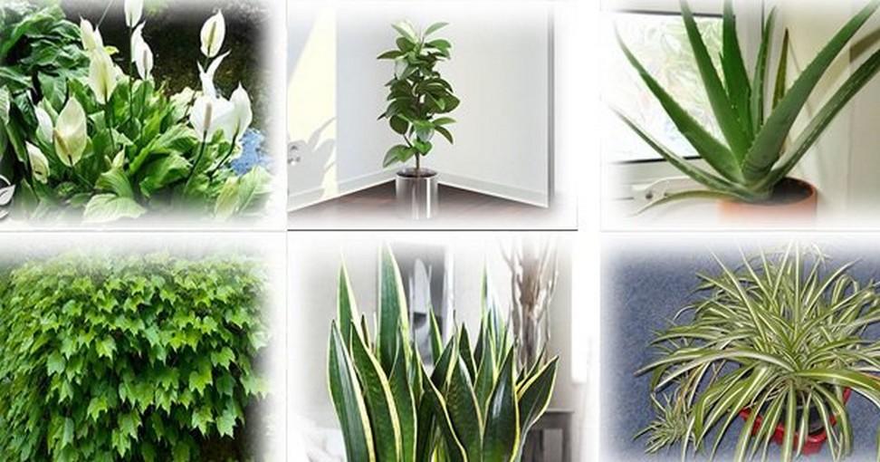 ces plantes sont des bombes oxyg ne ayez au moins l. Black Bedroom Furniture Sets. Home Design Ideas
